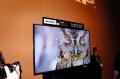 放弃直升4K节奏 夏普2014重点打造Q+巨屏电视