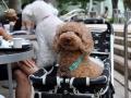 专门为养狗人士准备的咖啡厅正在众筹,可以带汪星人一起喝咖啡啦!