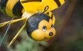 """""""信蜂""""蔓延――圈子传播的新兴群体进化"""