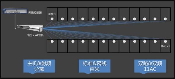 华南农业大学:赏三月紫荆校园 看万千无线花开