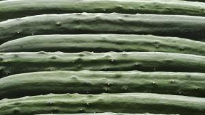 被玩坏?这家日本农场竟然用人工智能玩起了分拣黄瓜