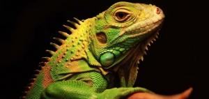 你还记得那只可爱的小蜥蜴吗?没错,就是SUSE!