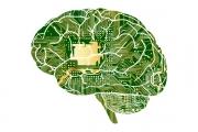 谷歌的秘密人工智能基金首次公开投资Algorithmia