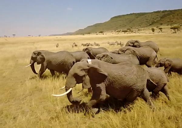 我们只有一个地球,阿里云用科技守护野生动物