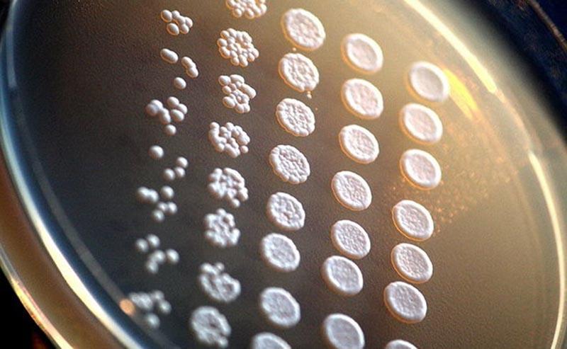 """科学家正在利用细胞生物学,?#24179;?#20154;工智能""""黑匣子"""""""