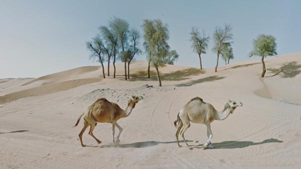 Google街景帮助恐旷症患者了解世界