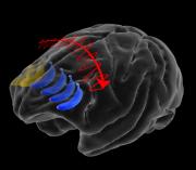 大脑如何帮我们记住所见所闻?