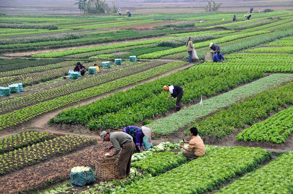 """拼多多的""""助农""""故事:帮农民卖农货是我们的基因"""
