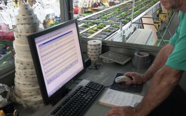 区块链技术究竟能为食品行业做些什么?
