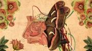 想理解人類大腦工作原理,可以從我們的嗅覺系統開始