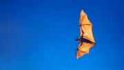 如何预测野生动物带来的下一场传染病大爆发?
