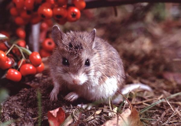 如何追踪野生动物带来的下一场传染病大爆发?