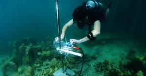 英特���c埃森哲利用AI技�g拯救珊瑚礁