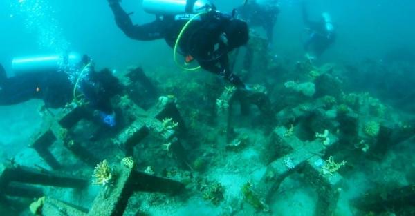英特尔与埃森哲利用AI技术拯救珊瑚礁