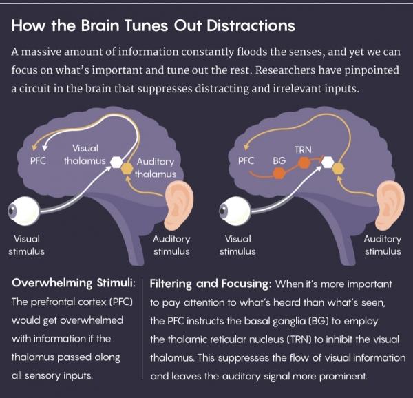 人类集中注意力的真相:大脑在过滤,而非聚焦