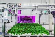 蔬菜的滋味,AI和你都想了解
