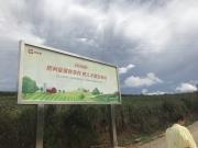 """把雪莲果从云南文山卖到全国 是""""拼""""出来的一条产业链"""