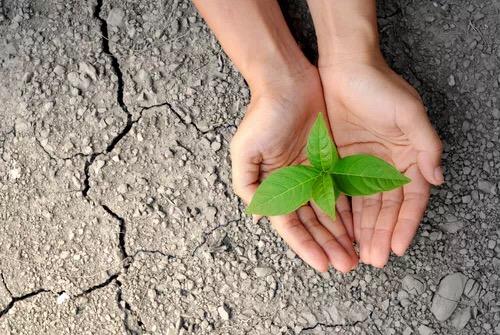 12500棵沙漠树,我们种下希望,我们一同成长