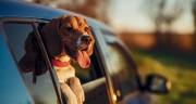"""AI再""""出圈"""":充当宠物行为学专家与健康管理师"""