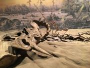 恐龙也患有癌症?