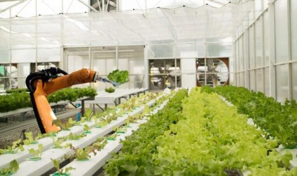 食品工业中的人工智能:赋予农民决策权