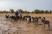 """西非牧民正在用AI应对""""饥饿?;?>                     </a>                 </div>                 <div class="""